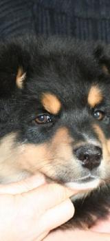 Baxter14 1224580299