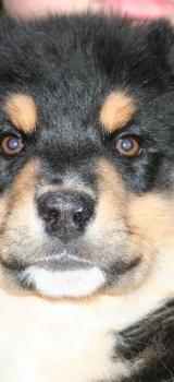 Baxter2 1224579951
