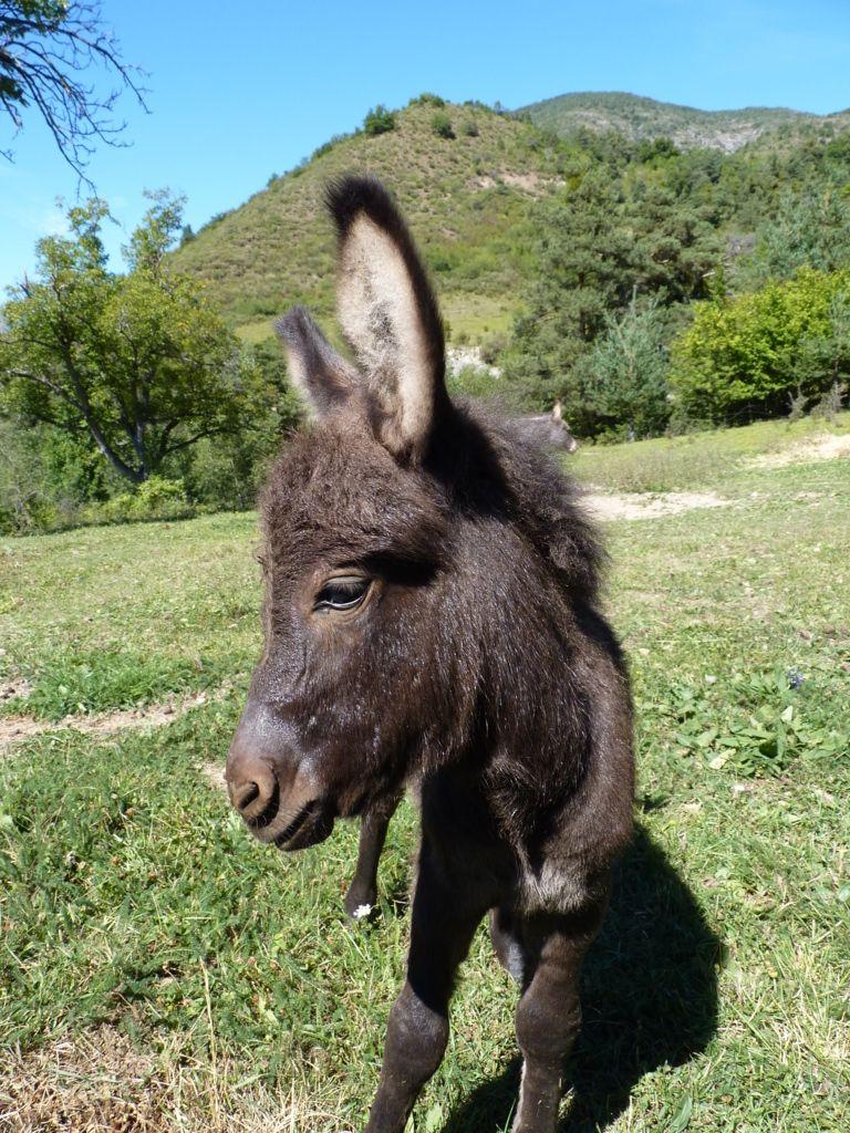 Salut, Lucien mon bon ami lâne aux poils raides et doux, lisses et râpeux, dit Mârco Valdo M.I..