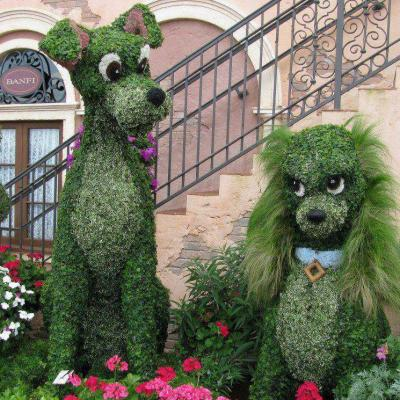 Verdure chiens